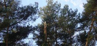 Verzorging van Groen - Brasschaat - Referenties (Bomen)